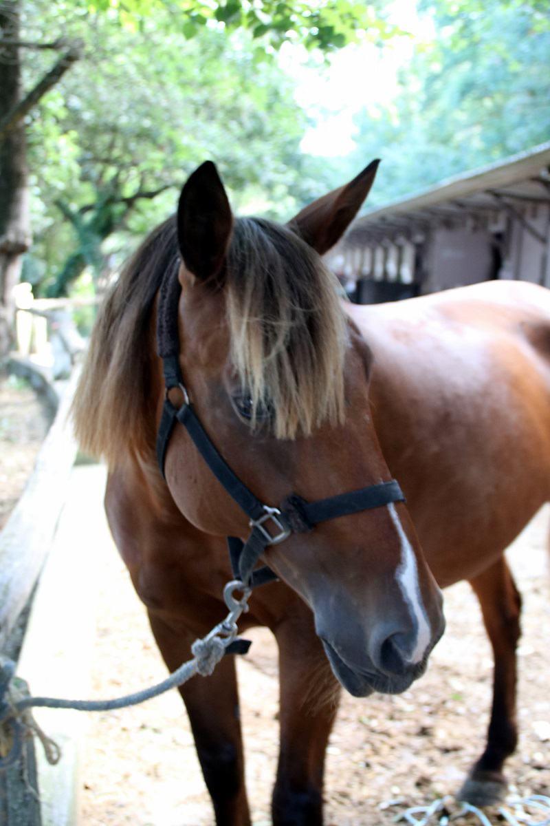 cheval demi pension 06