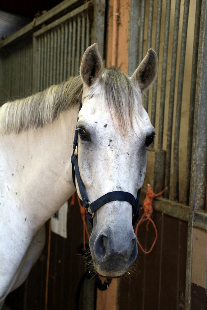 demi_pension cheval 06
