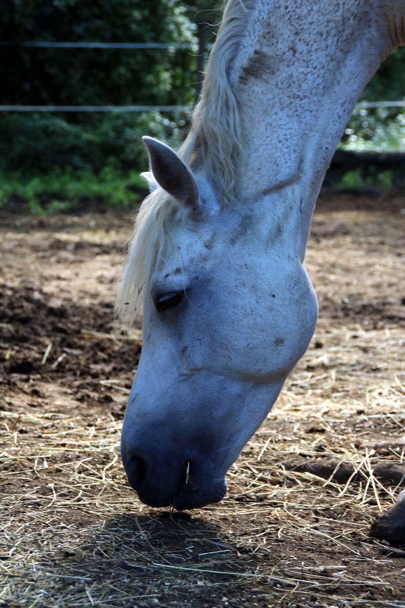 demi pension cheval dans le 06