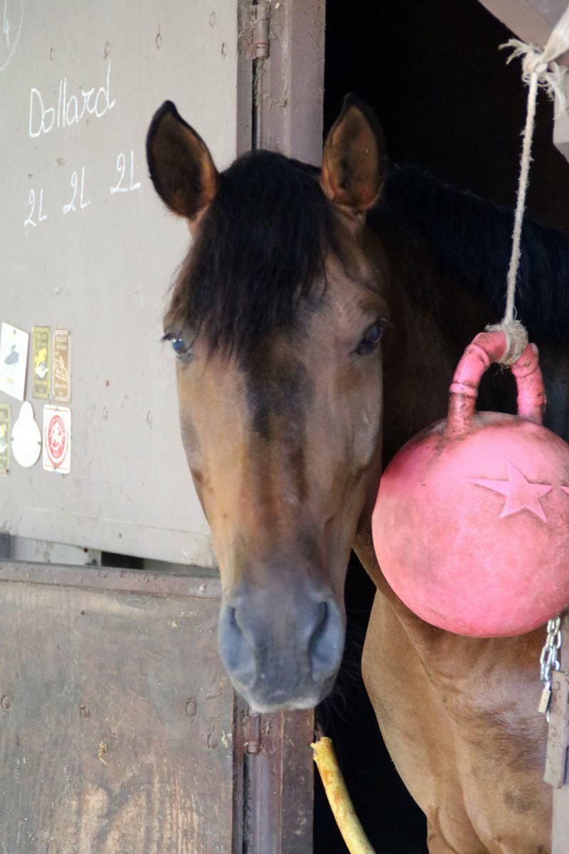 demi pension cheval nice