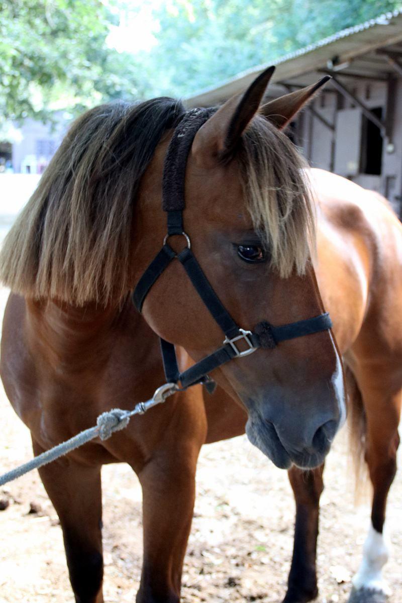 demi pension chevaux 06