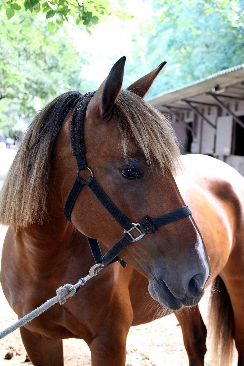 demi pension poneys 06
