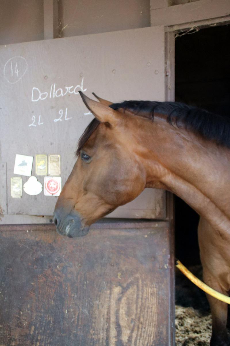 demi pension sur cheval dans le 06