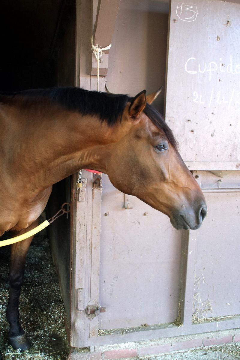 prendre un cheval en dp 06