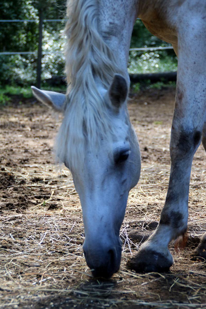 prix demi pension chevaux 06