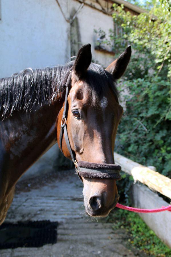 demi pension chevaux